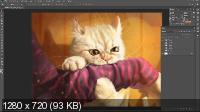 Стрим по рисованию кота в Photoshop (2019)
