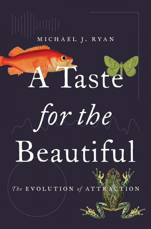 A Taste for the Beautiful Evolution of Attraction by Michael J Ryan