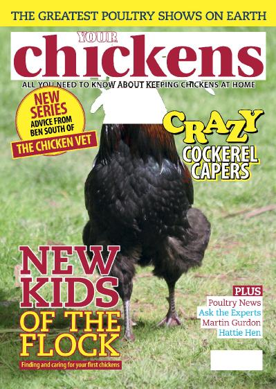 Your Chickens  February (2019)
