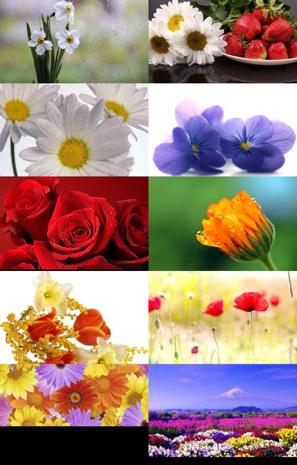 Beautiful Flowers Wallpapers {pack   122}
