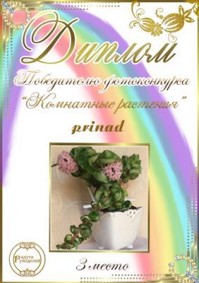 """Фотоконкурс """"Комнатные растения"""". Поздравляем победителей. 10ed630ffa85a15636cbf66a97973373"""